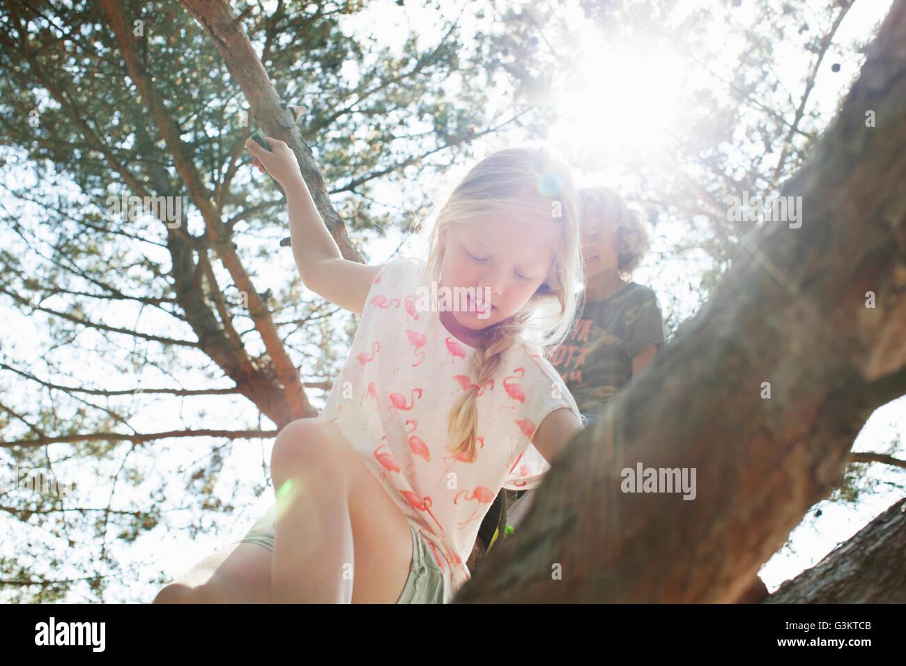 Boy and girl climbing tree - Stock Image