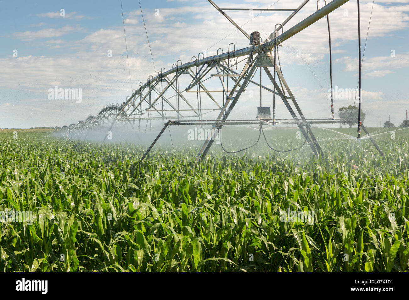 Large scale irrigation of a corn field July 25, 2015 outside Fort Collins, Colorado. Stock Photo