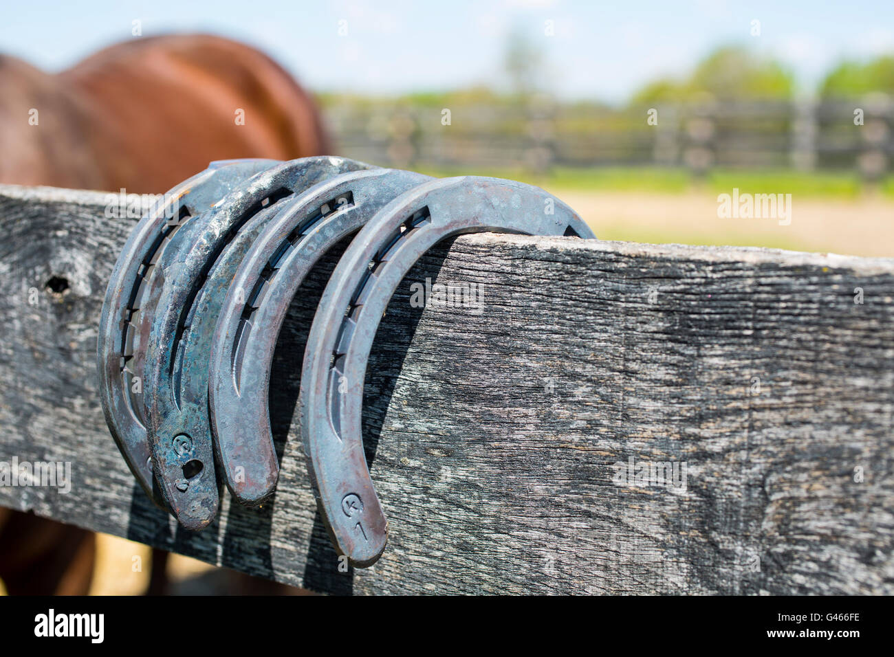 Horse shoes on fence Stock Photo