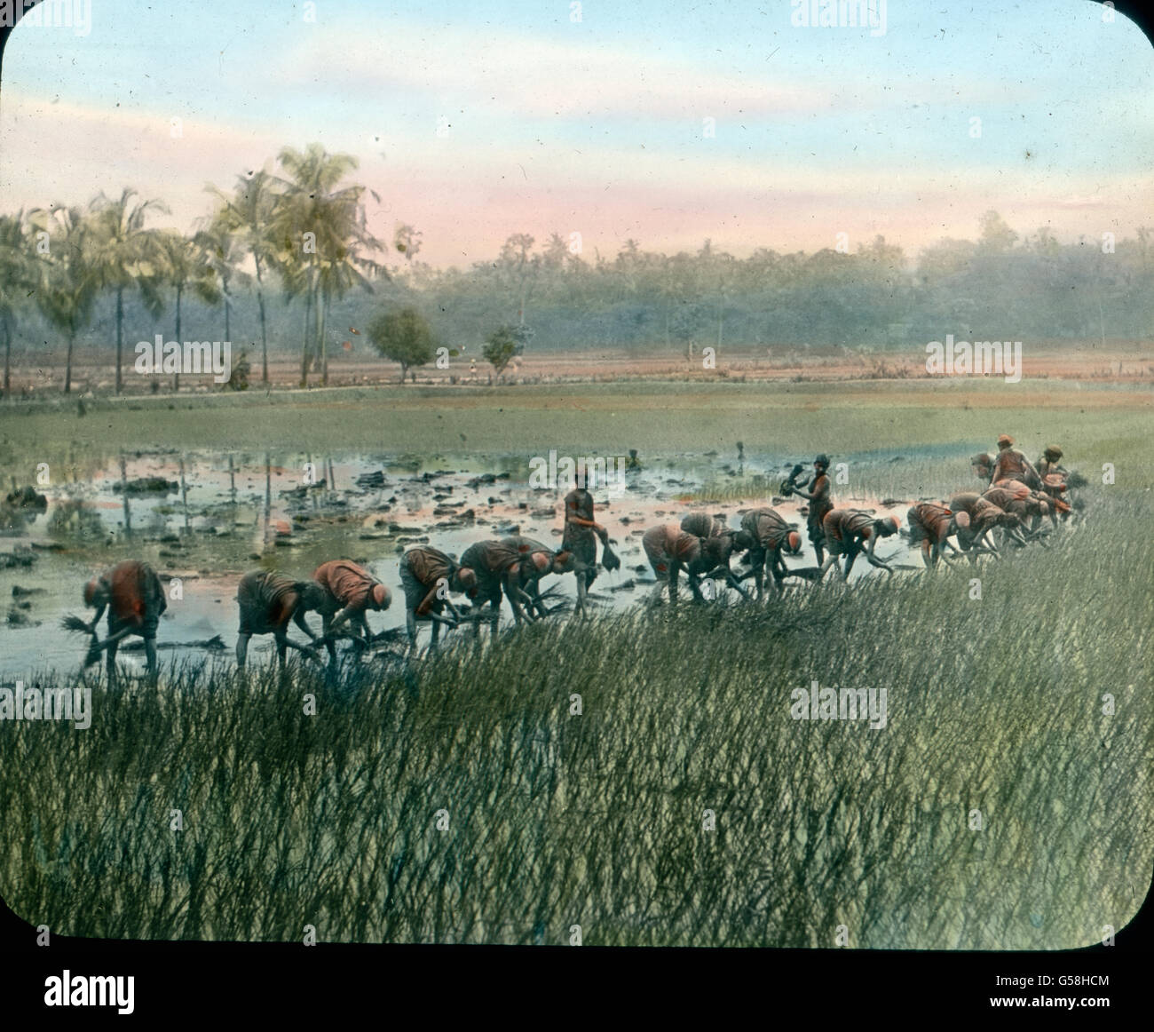 Bauern pflanzen Reis als Ernährungsgrundlage an. India, Asia, travel, farmer, rice, food, seed, 1910s, 20th - Stock Image
