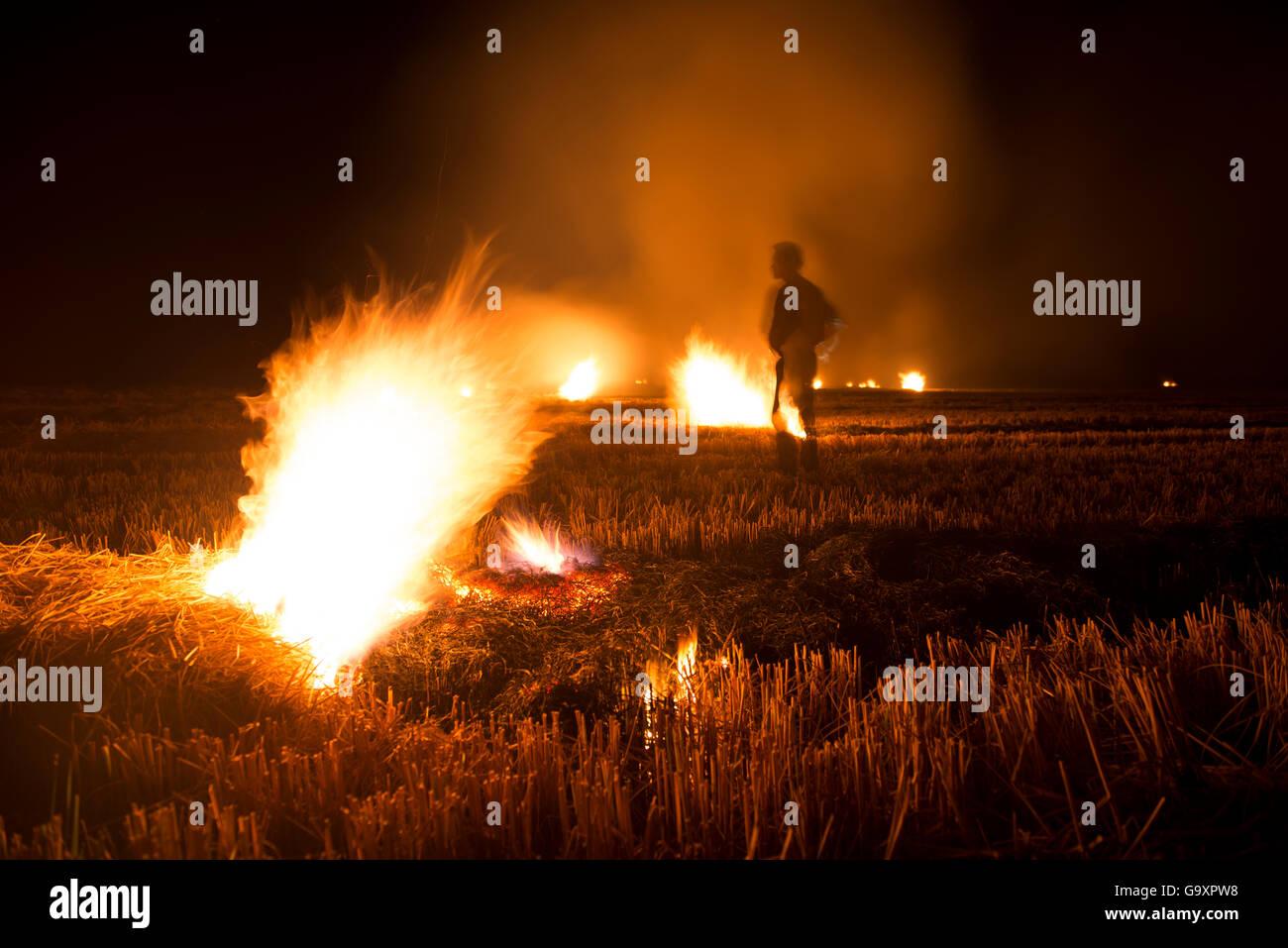 Burning of rice field after harvest, Camargue, France, October. - Stock Image