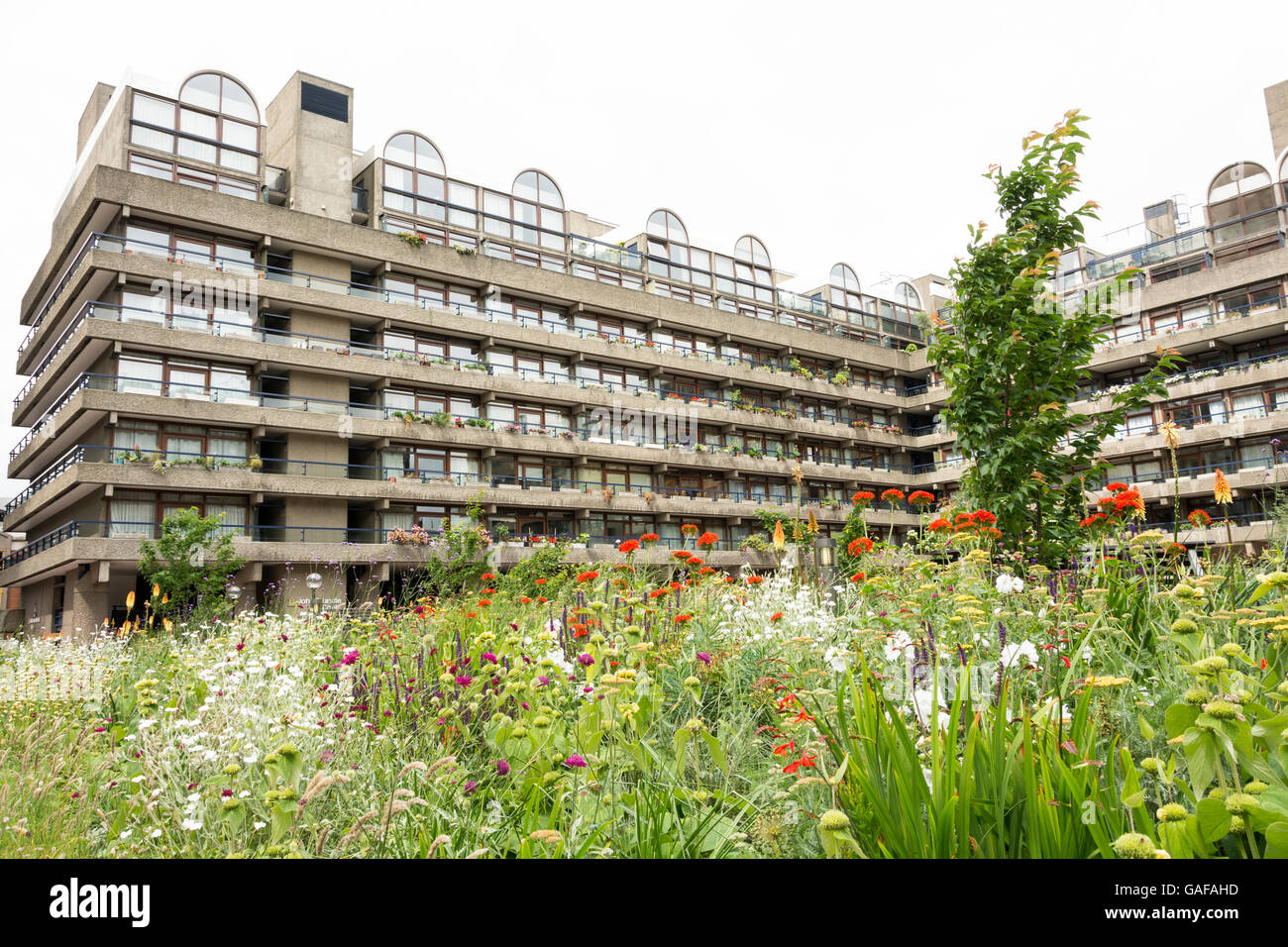 Poppies and wildflowers surround the Barbican Exhibition Halls in the Barbican complex, City of London, UK Stock Photo