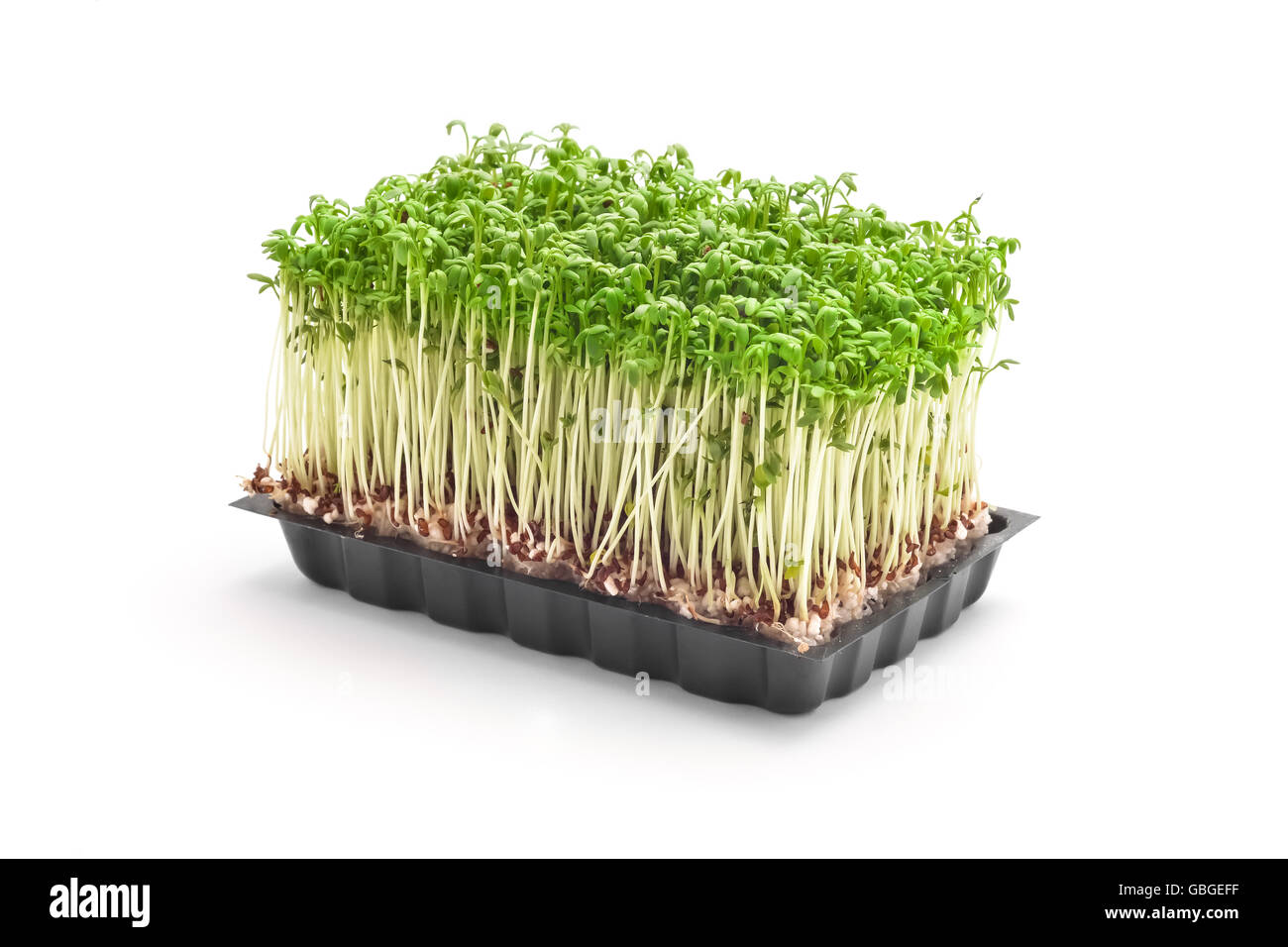 cress sprouts isolated on white - Stock Image