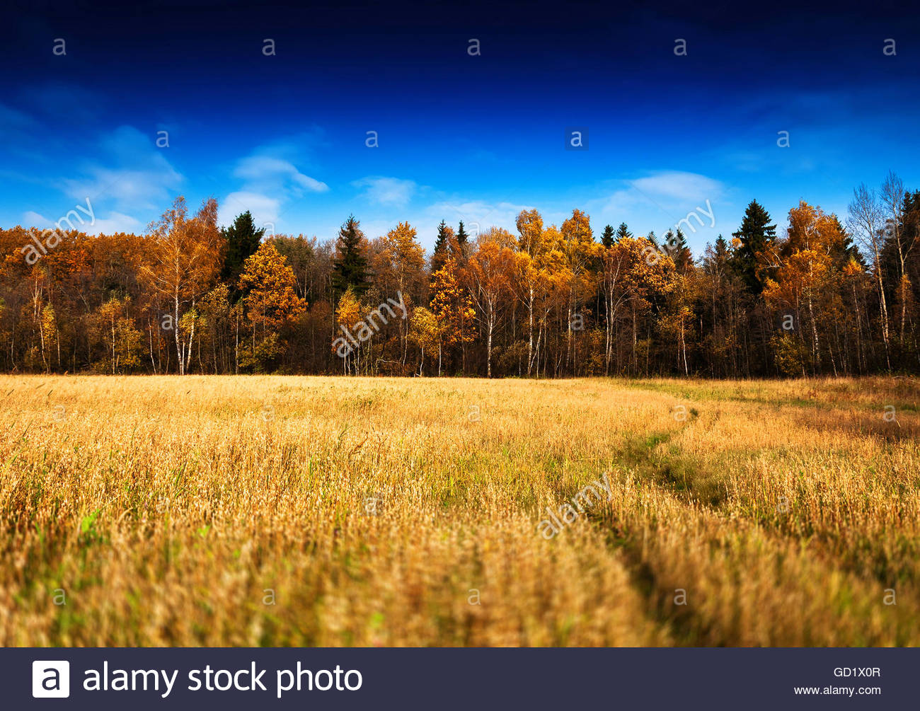 Horizontal Vivid Autumn Landscape Forest Field Road Background B