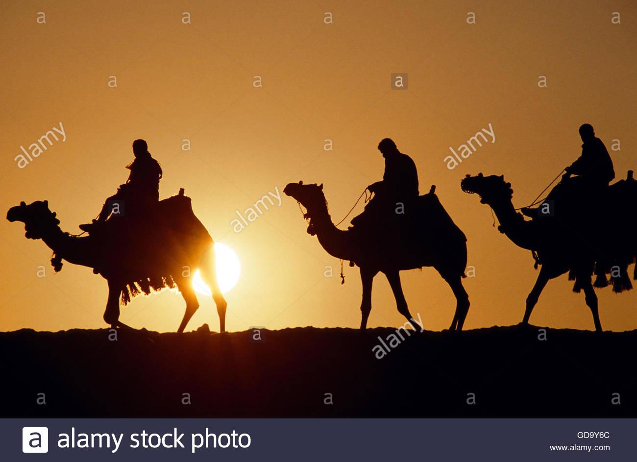 Egypt Camel Caravan at sunset - Stock Image
