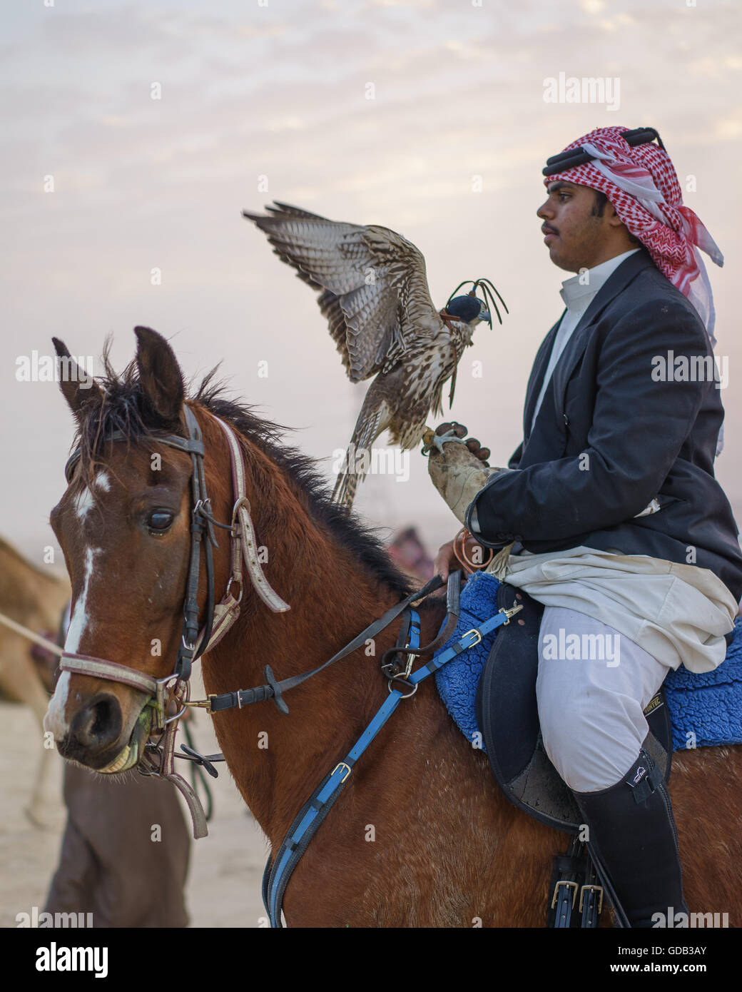 Hunter on horseback with his falcon, Qatar. - Stock Image
