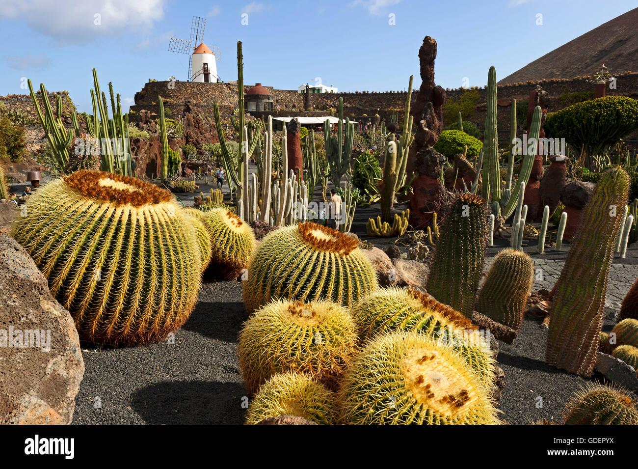 Jardin De Cactus Cactus Garden Guatiza Lanzarote Canary Islands