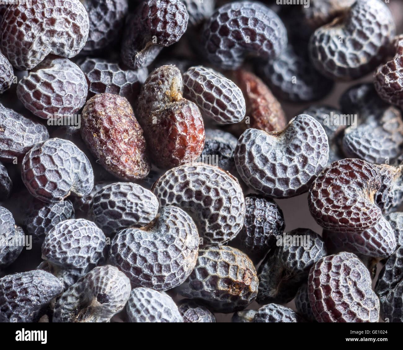 Macro shot of poppy seed. - Stock Image