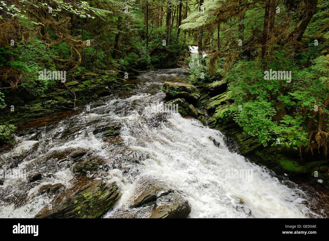 Mountain stream, Revillagigedo Island, Ketchikan, Alaska, USA Stock Photo