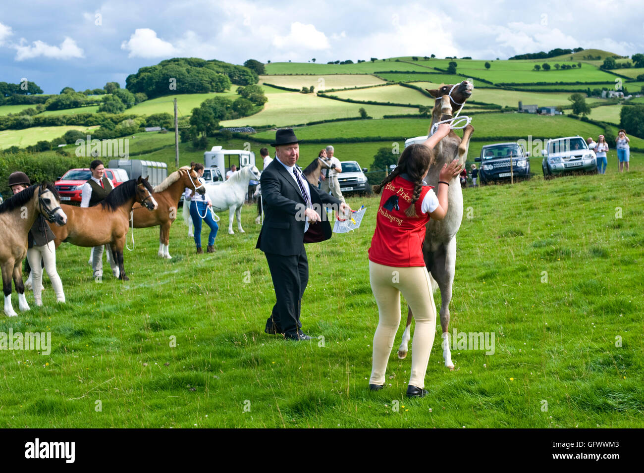 Judging of Welsh Mountain Ponies at Gwenddwr Show, Gwenddwr, near Builth Wells, Powys, Wales, UK - Stock Image