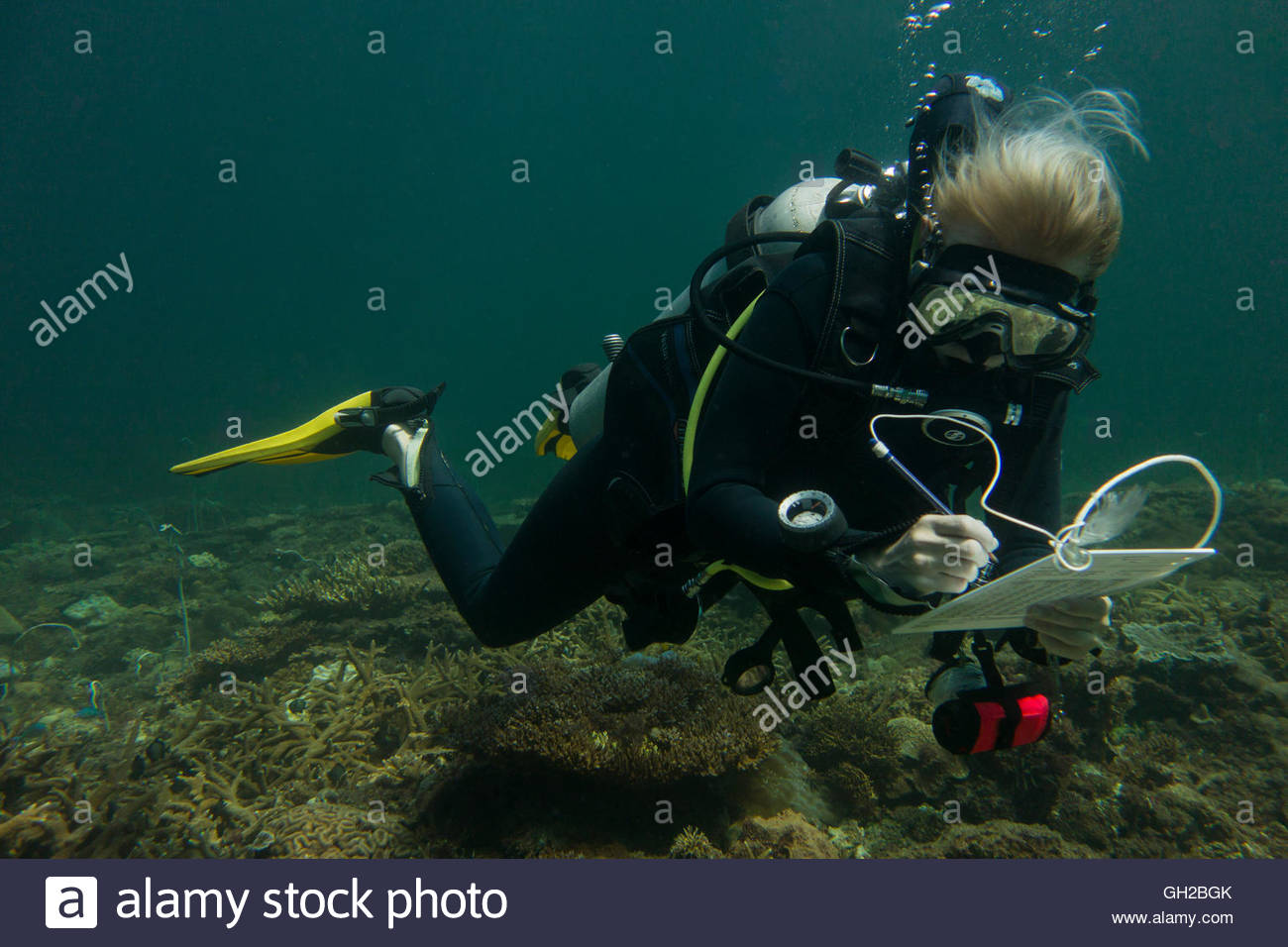 Diver during underwater data collection on coral reefs in Brunei, South East Asia. - Stock Image