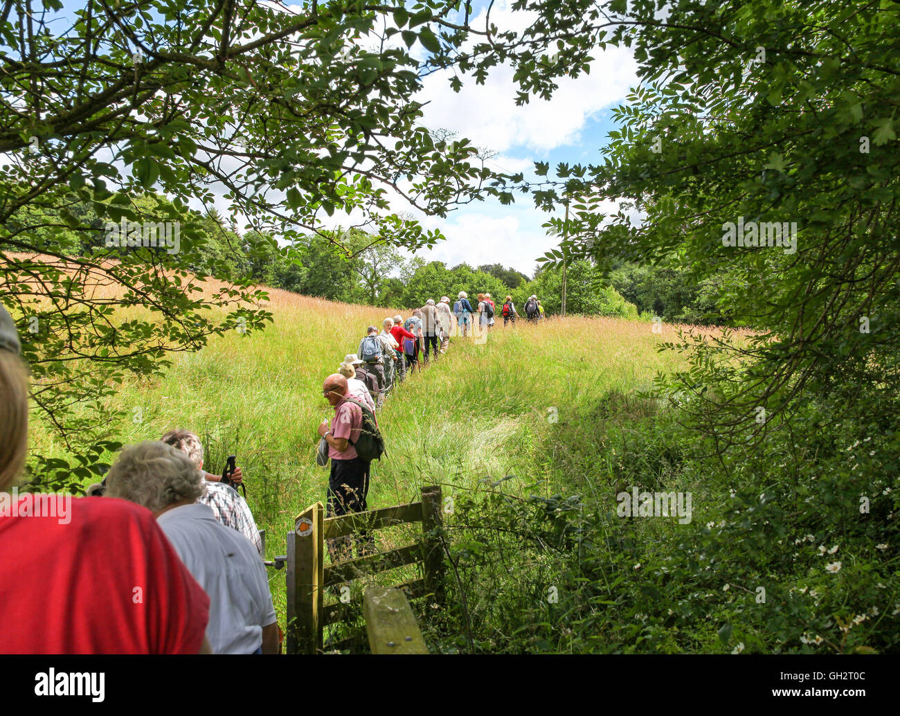 a-line-of-walkers-on-an-organised-walk-across-a-field-in-the-countryside-GH2T0C.jpg