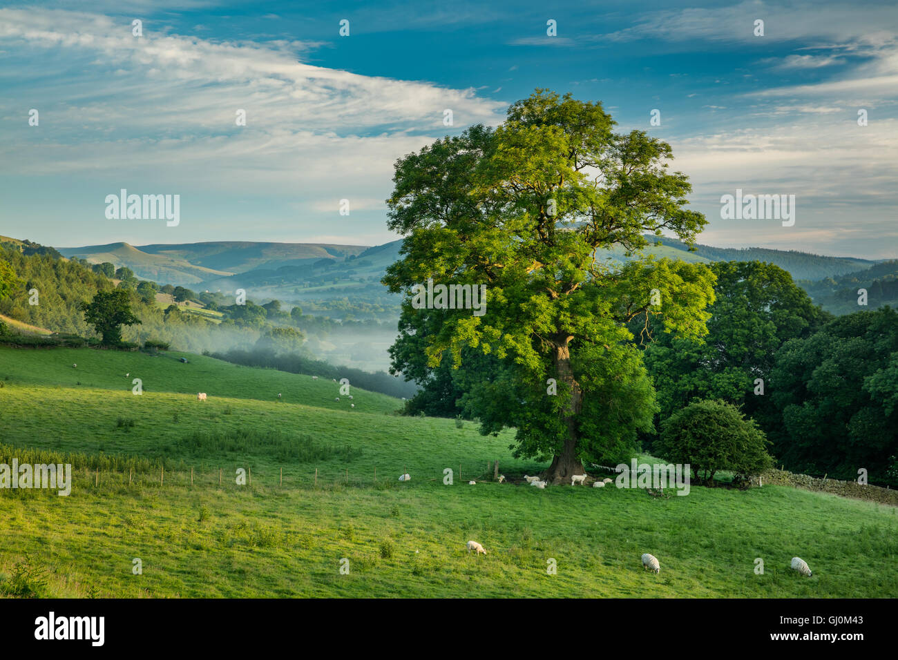 Edale at dawn, Peaks District National Park, Debyshire, England - Stock Image