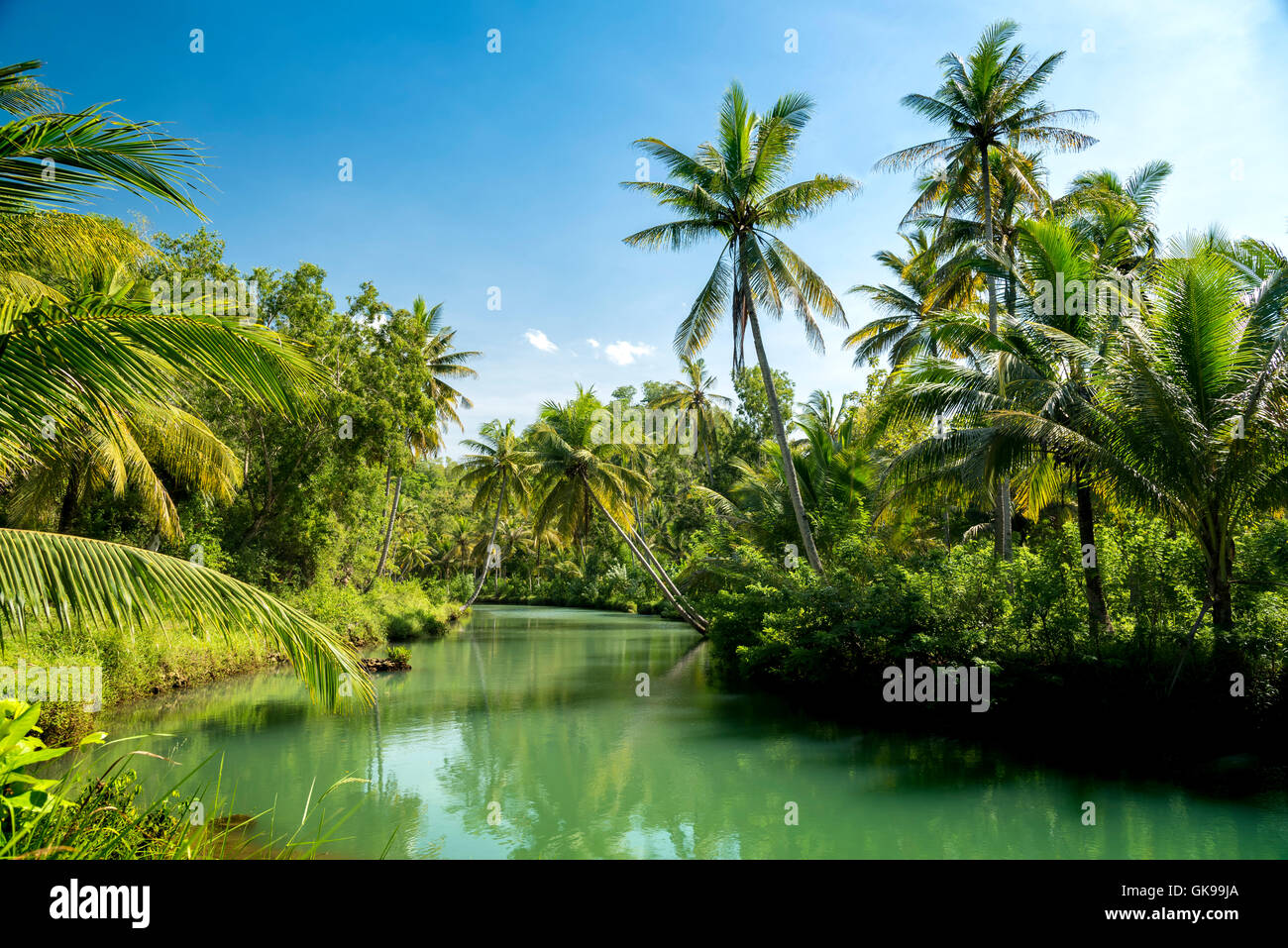 Coconut palms above the river in jungle of  Indonesia - Stock Image