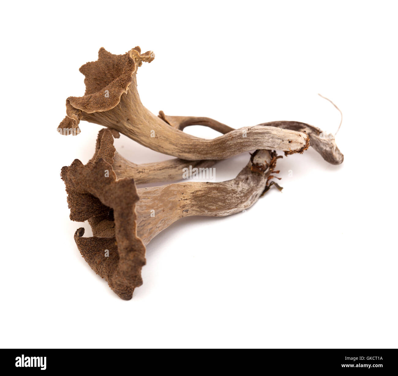trumpet of the dead edible mushroom isolated on white background Stock Photo