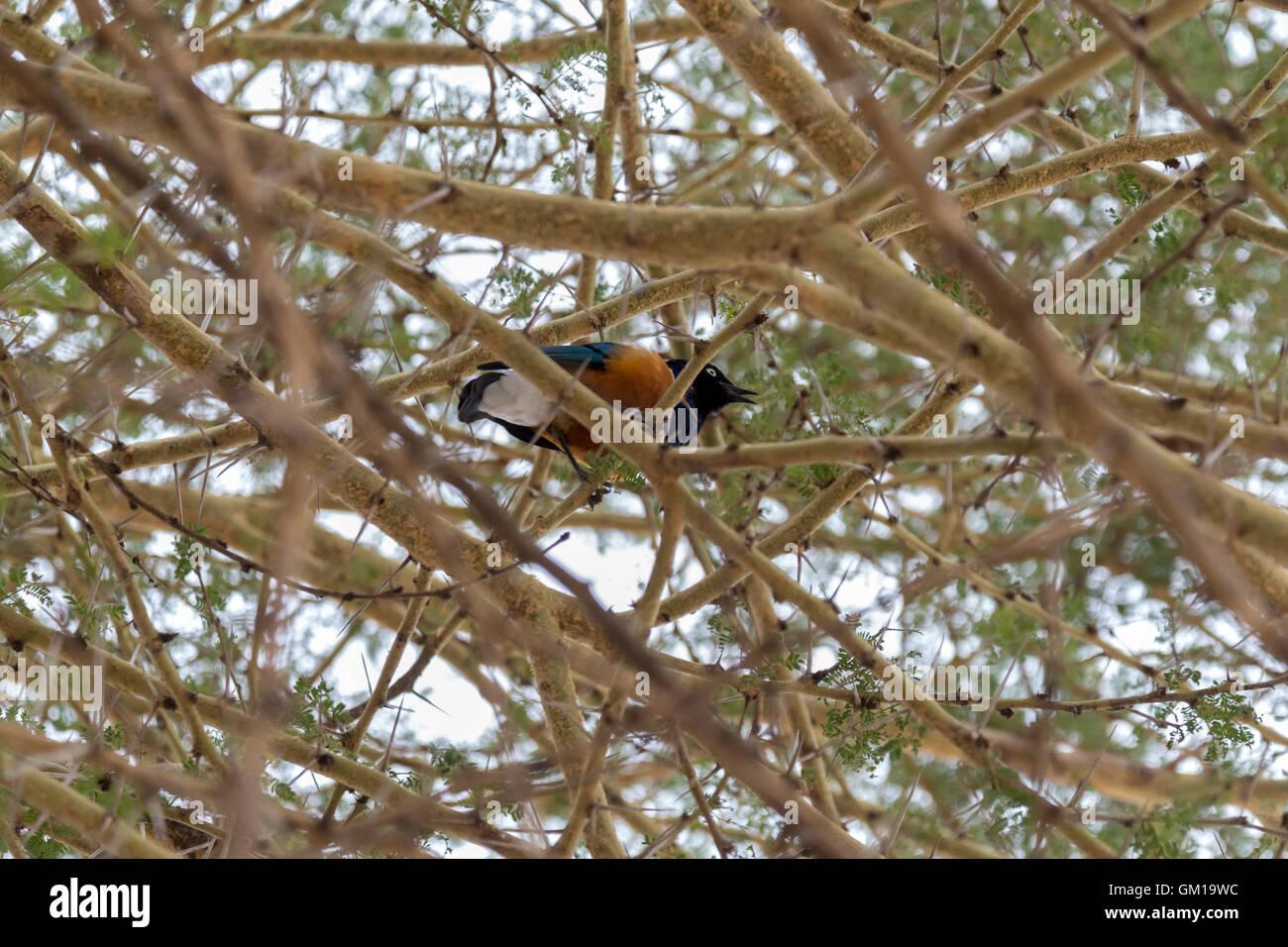 starling, nature, branch, bird, spring, house, nest, beautiful Stock ...