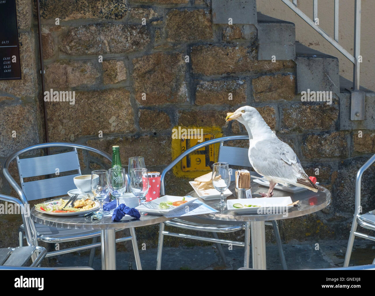 A svanging Seagul on a Cafe Table in St Ives cornwall Stock Photo