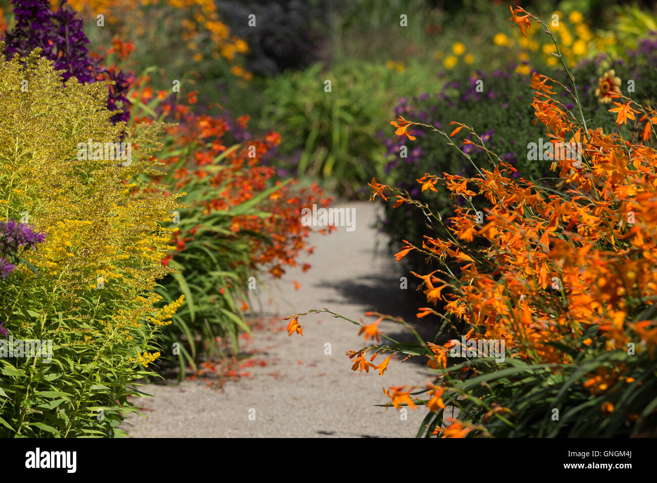 Brightly coloured golden rod and crocosmia soften the edges of a ...