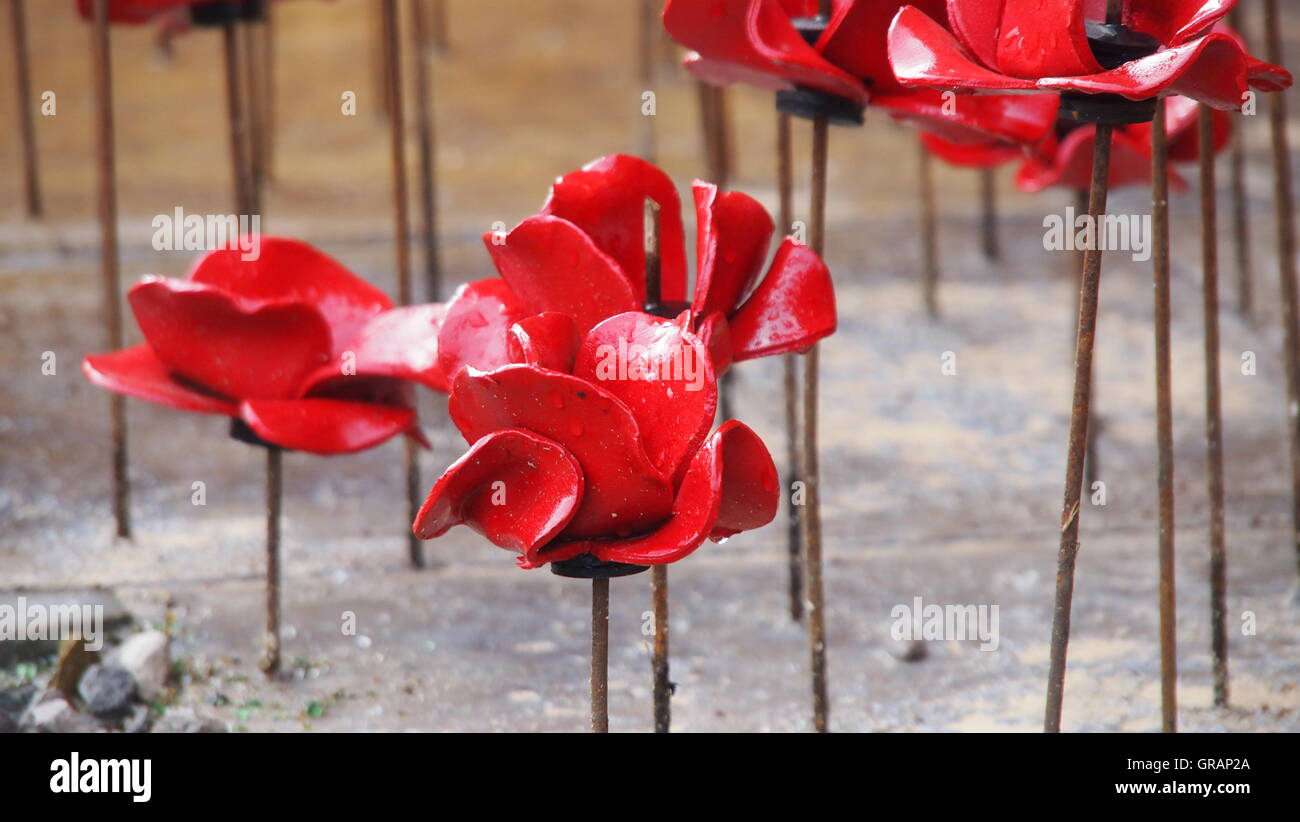High angle view of wet artificial poppy flowers made from ceramic high angle view of wet artificial poppy flowers made from ceramic mightylinksfo