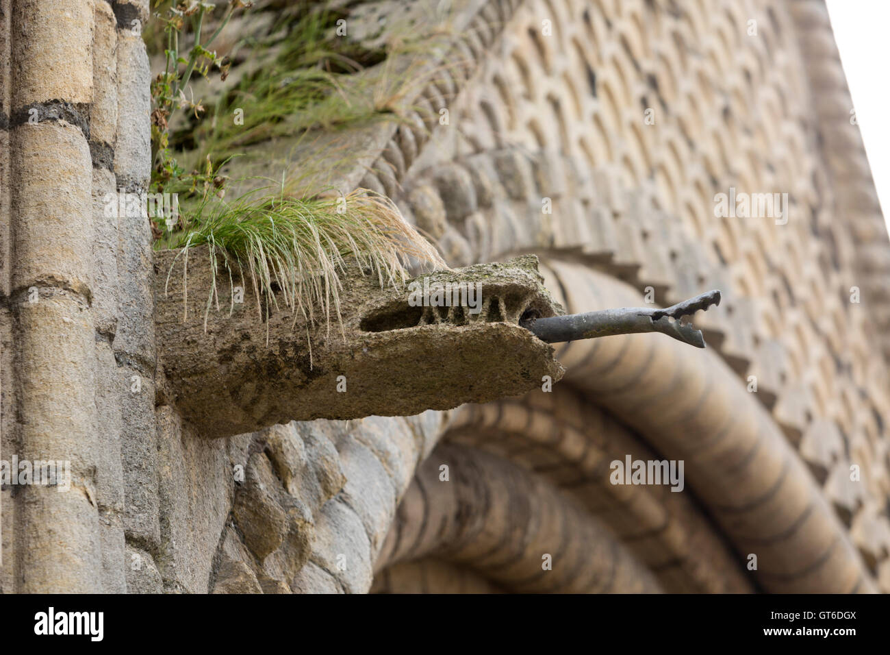 Stone gargoyle water spout with punk style grass hair like growing on top. Unsharpened - Stock Image