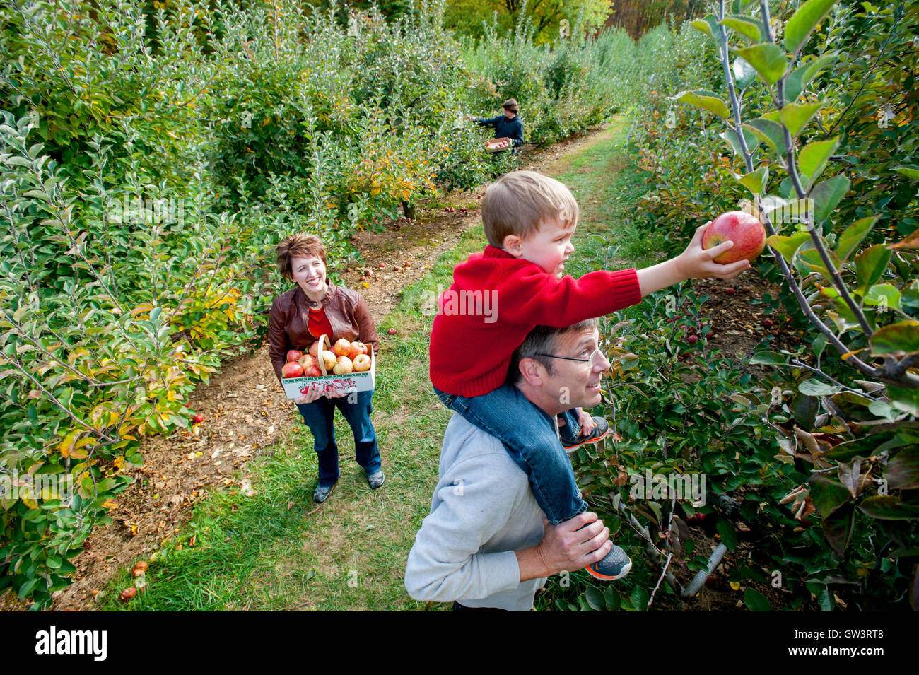 usa-maryland-family-apple-picking-at-a-p