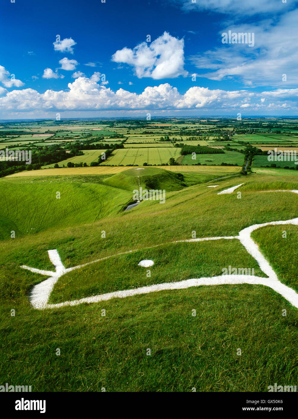 Head & eye of the dragon-like Uffington White Horse chalk figure carved on the hillside above the flat-topped - Stock Image