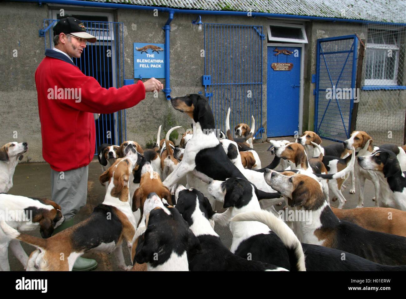 Dog Kennels Barry