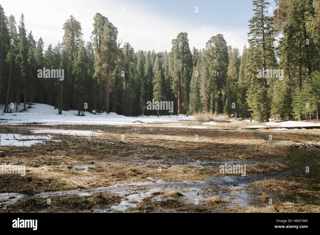 A small stream running through California's Sequoia National Park - Stock Image