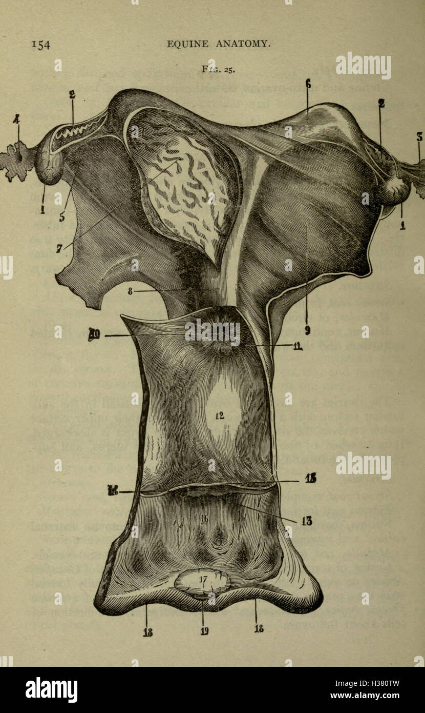 Fantastisch Free Equine Anatomy And Physiology Courses Online ...