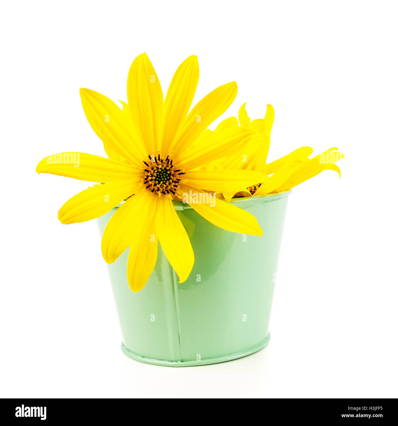 Yellow Flowers In Green Pot With Thin Petals On Light White Stock