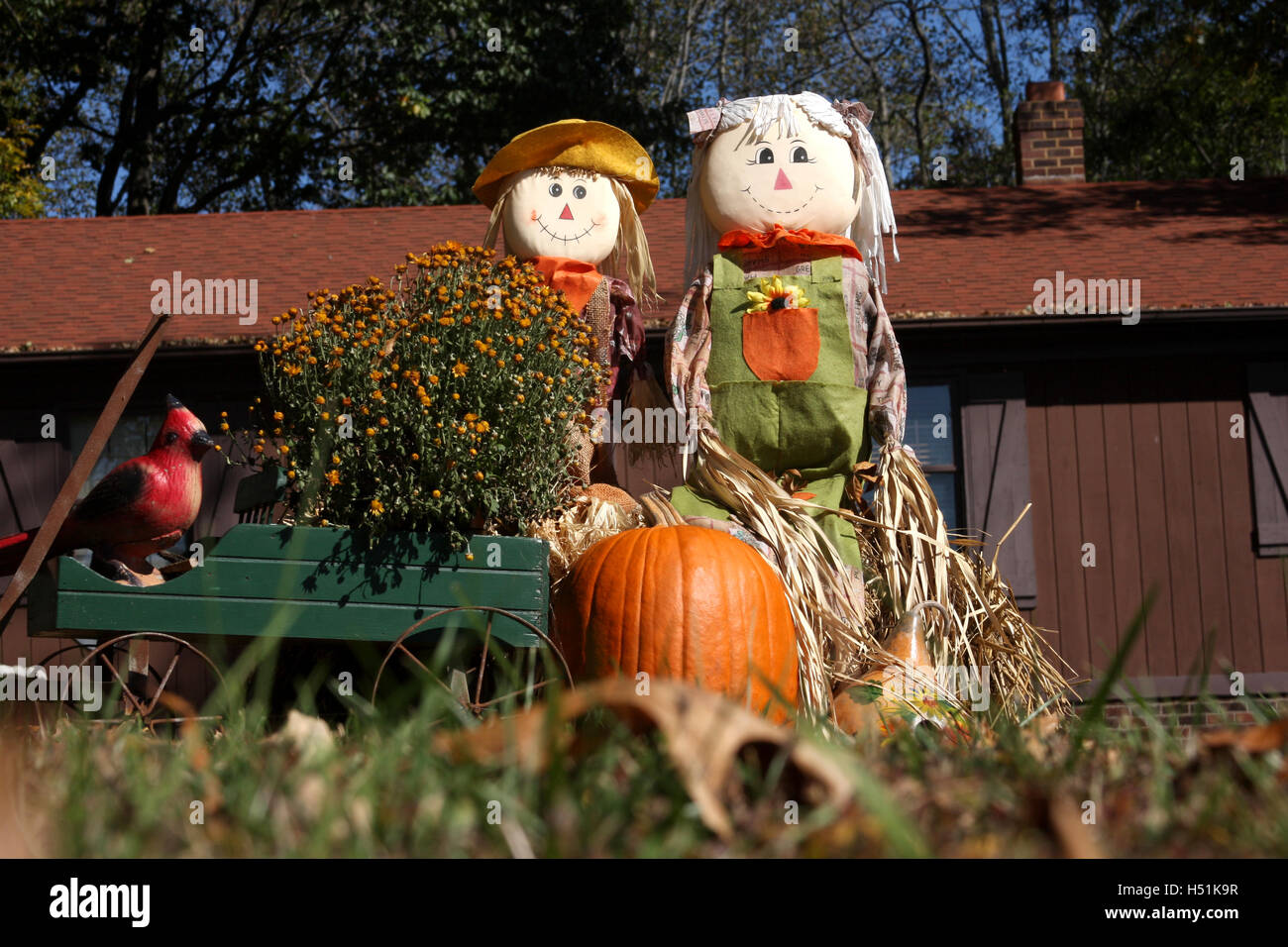Outdoor Fall Decoration With Scarecrows And Pumpkin Stock Photo
