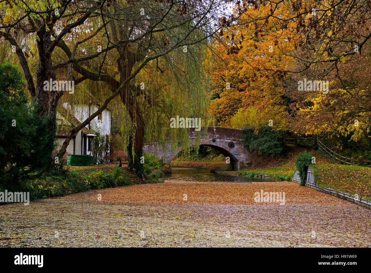 the-basingstoke-canal-at-winchfield-hampshire-england-uk-H91W69.jpg