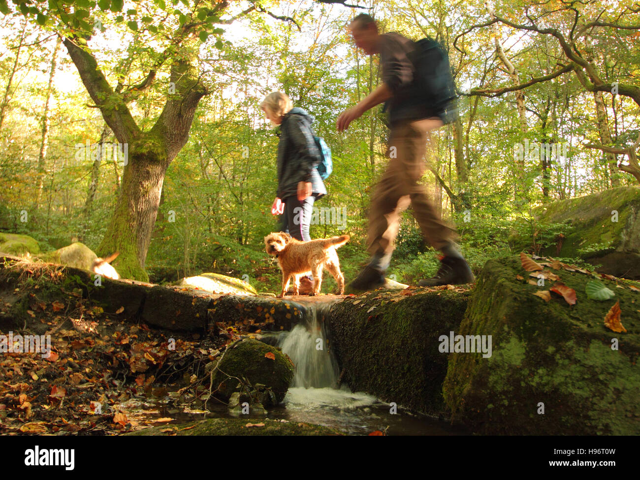 Dog walkers on a footpath through Froggatt Wood, Derbyshire on a fine autumn day in the Peak District National Park, - Stock Image