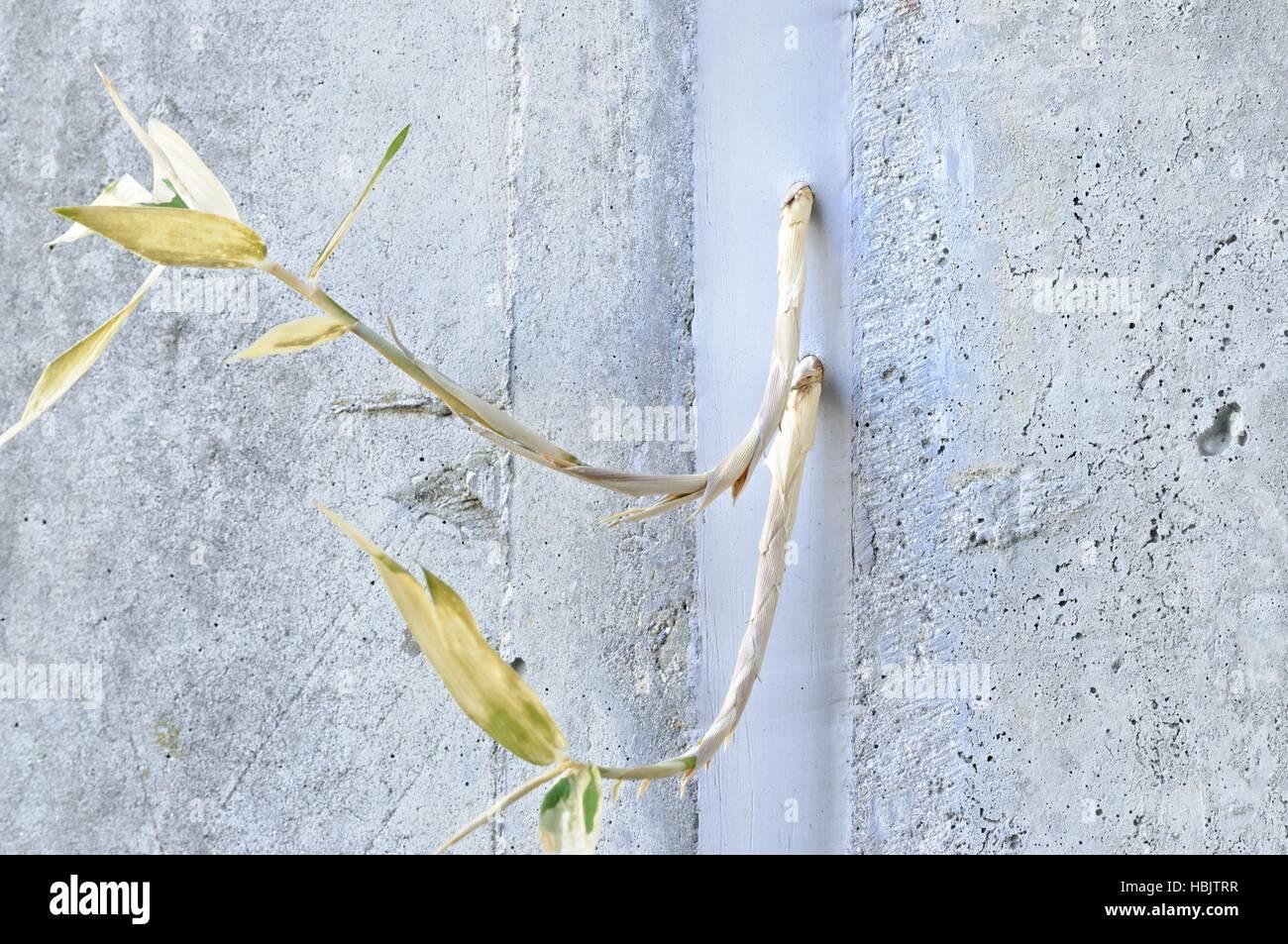 Bamboo Through The Silicone Stock Photo 127648411 Alamy