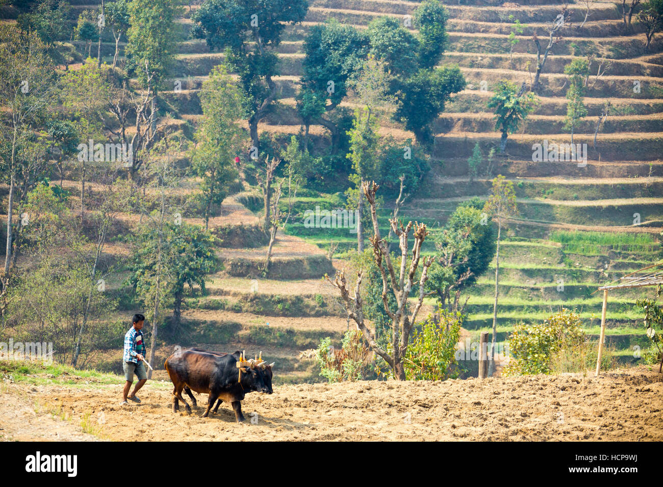 Plowing in Sindhulpalchok District, Nepal - Stock Image