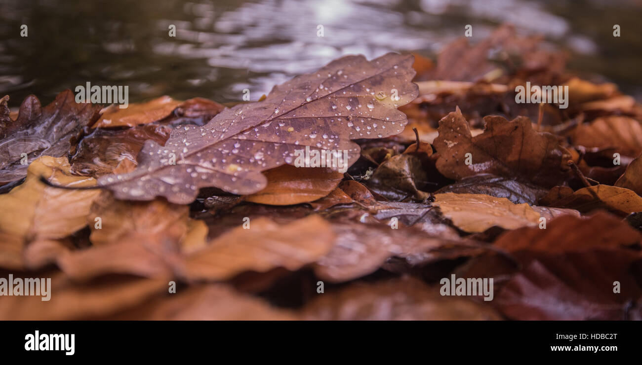 Autumn leaves at the edge of the River Dart in South Devon close to Holne Bridge. - Stock Image