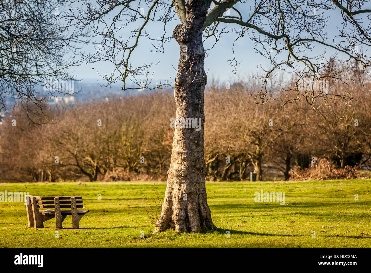 Empty Bench In A Park In Spring England Stock Photo 129035994 Alamy