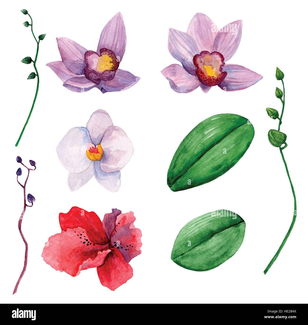 Hawaiian Flowers Vector Clipart Watercolor Orchids Clip Art Stock