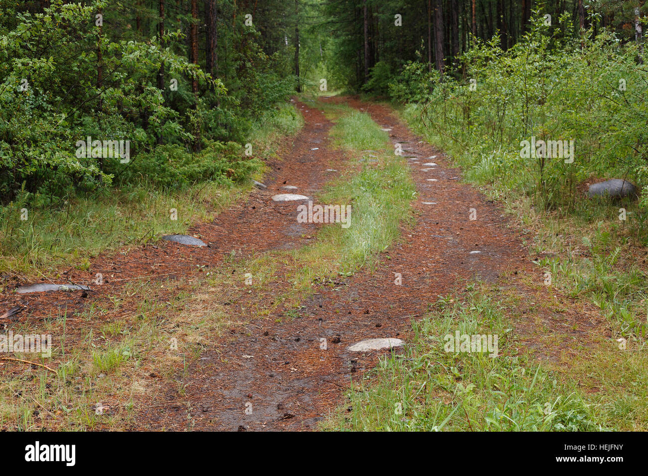 Track through forest in Siberia, Russia - Stock Image
