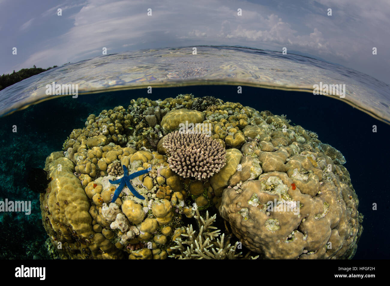 Corals grow in shallow water in the Solomon Islands. This region is known for its incredible marine biodiversity. - Stock Image