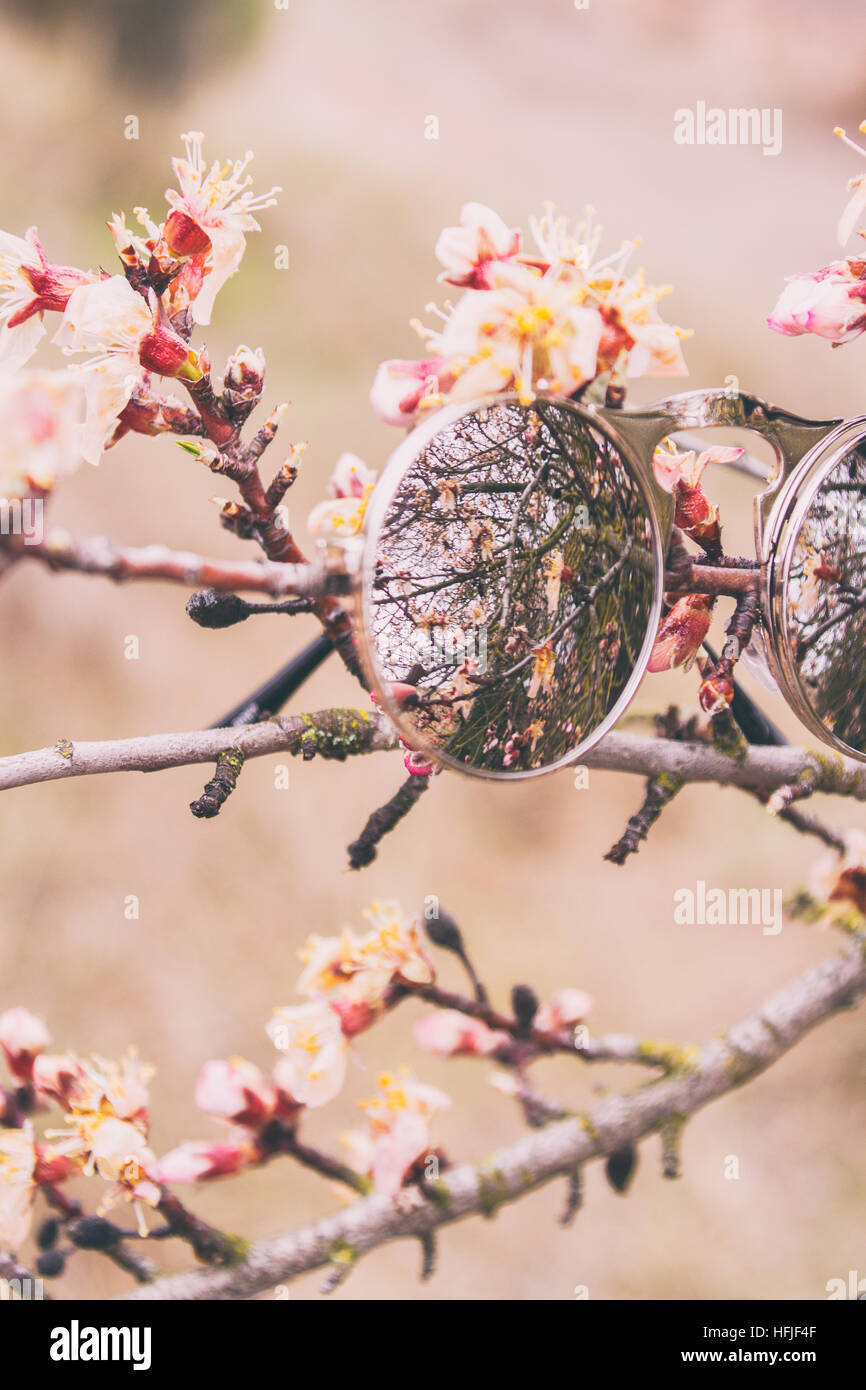 Circle mirror effect sunglasses over a branch with flowers in bloom - Stock Image