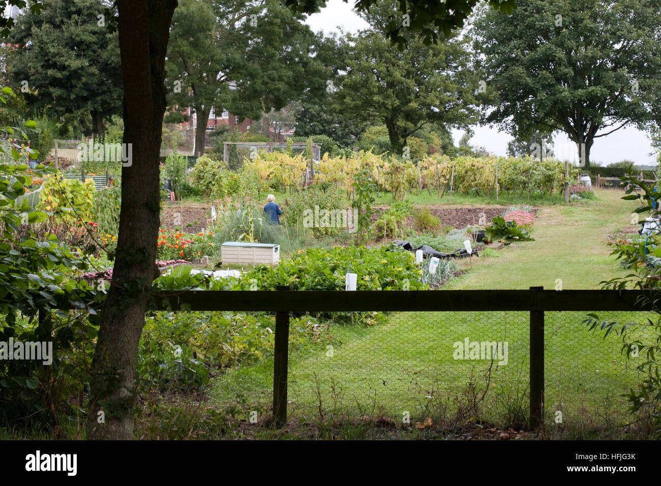 Neat and tidy allotments/truck patch Stock Photo