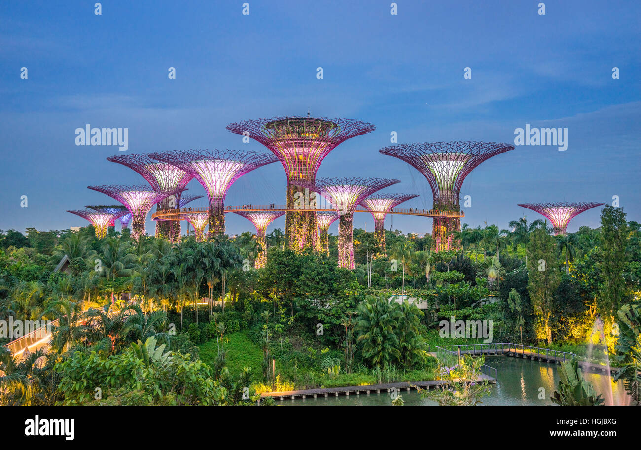 Singapore, Gardens by the Bay, evening view of the Supertree Grove - Stock Image