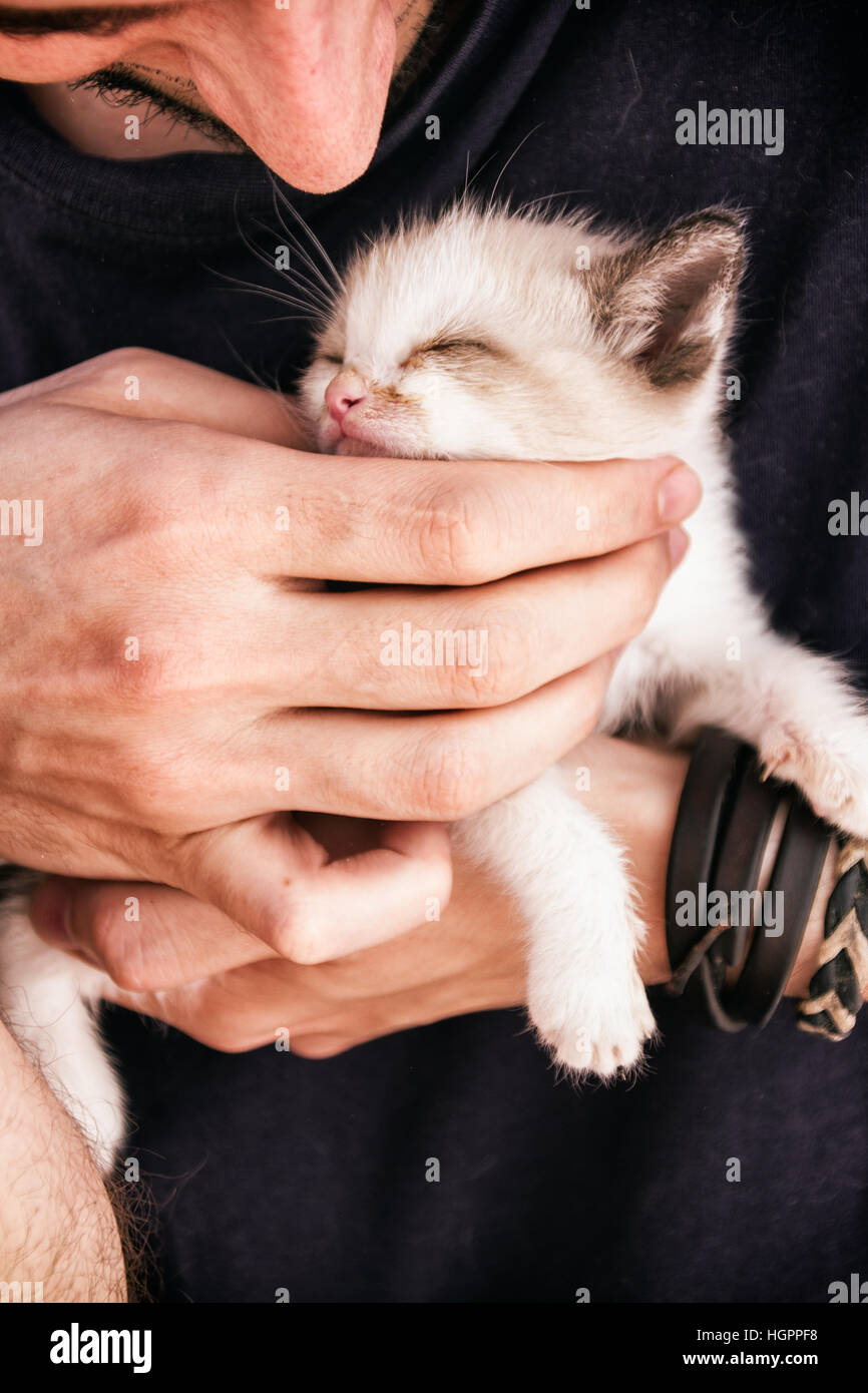 Young man's hands holding a baby siamese kitty - Stock Image