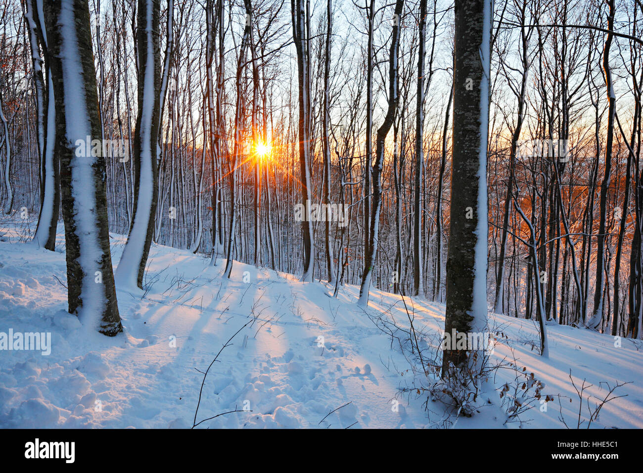 Sun in snow cowered forest - Stock Image