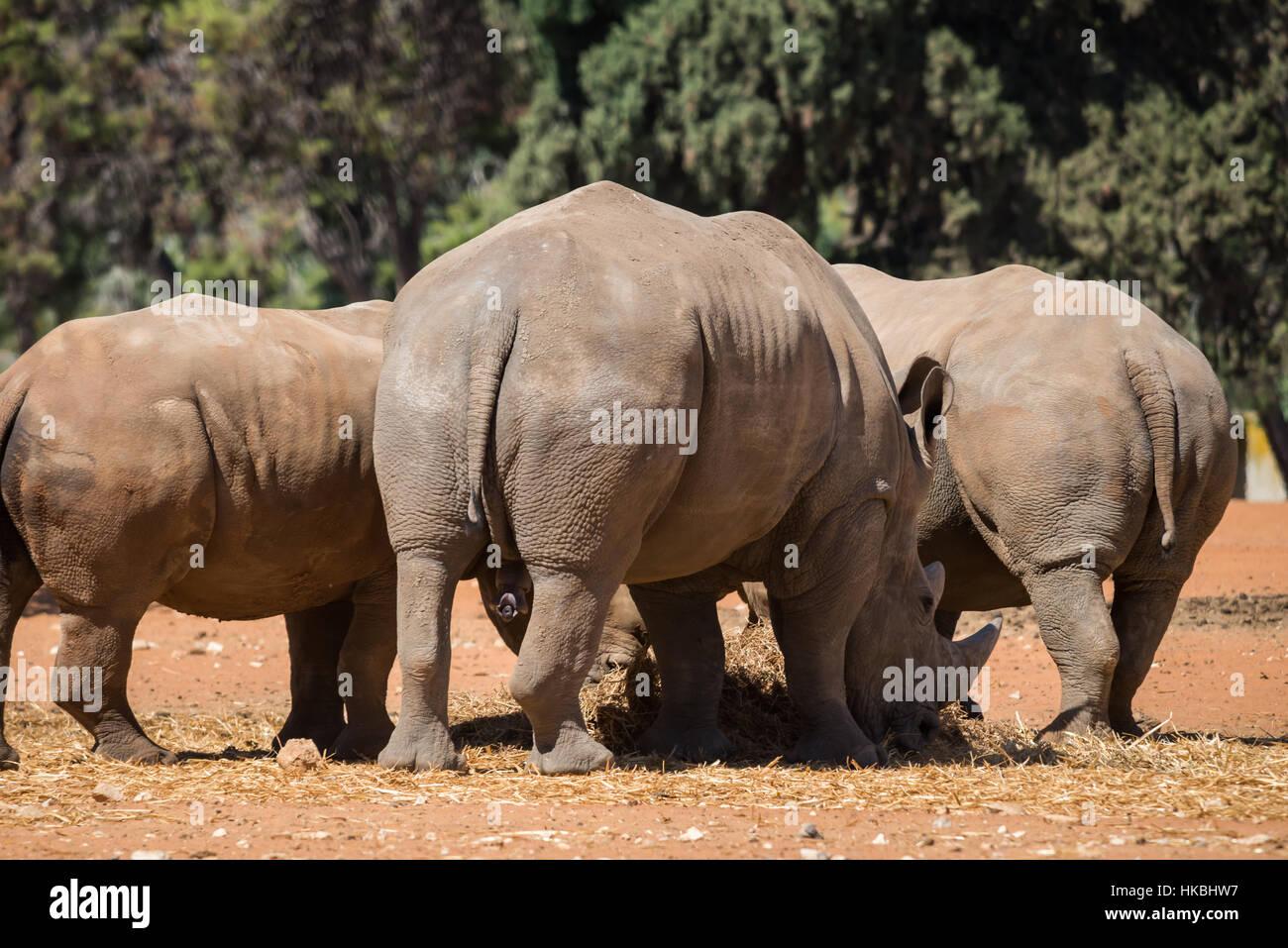 Visit to Safari Ramat Gan, Israel - Stock Image