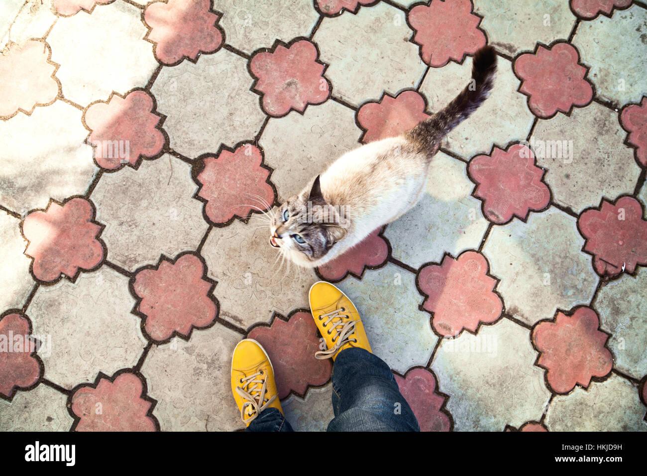Thai Food Man Cat
