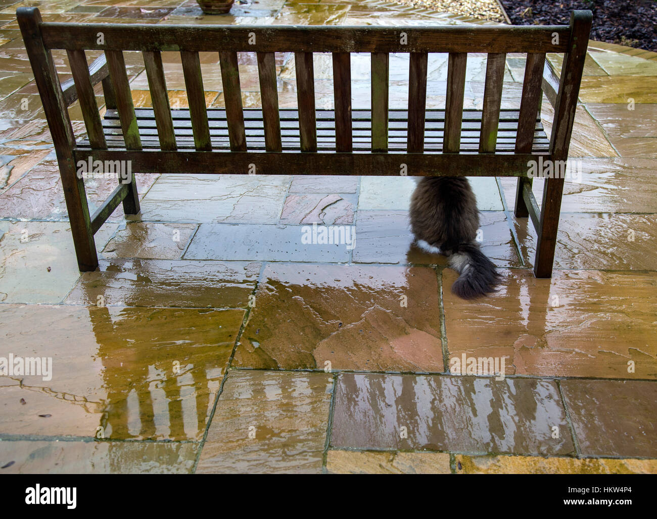 Sidmouth, Devon. 30th Jan 2017. Rain, rain, go away. A cat shelters from the pouring rain under a garden bench in Stock Photo