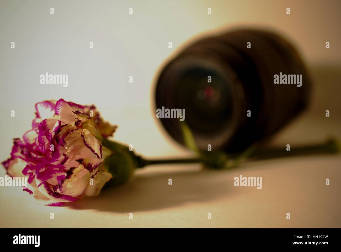Fallen rose with camera lens in background - Stock Image