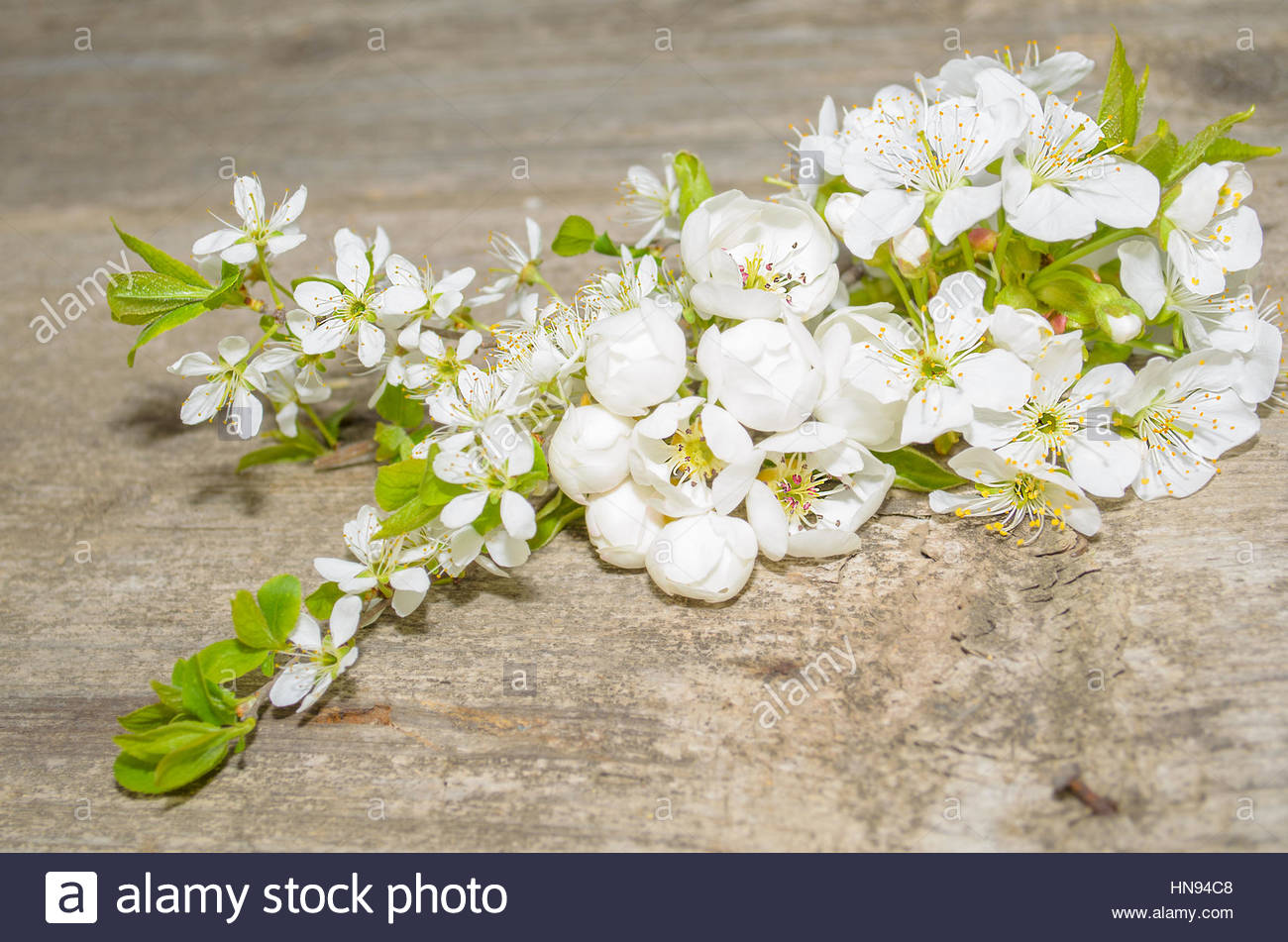 blooming tree branch - Stock Image